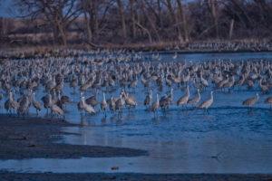 Crane Photo 1